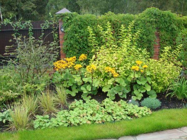 неприхотливые растения для засушливых участков