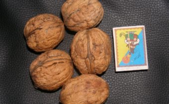 Популярные и редкие сорта грецкого ореха и особенности выращивания