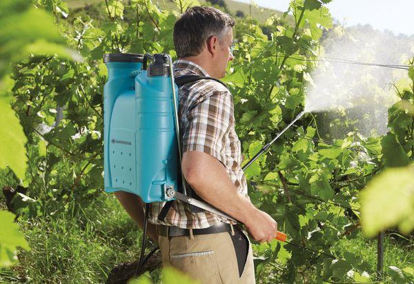 Что такое баковые смеси для винограда