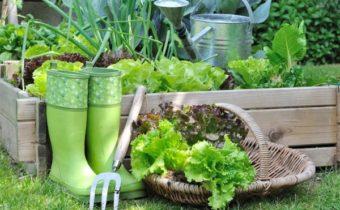 Что можно посадить в августе, чтобы успеть собрать второй урожай