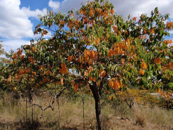 Как выявить возможных корневых вредителей деревьев