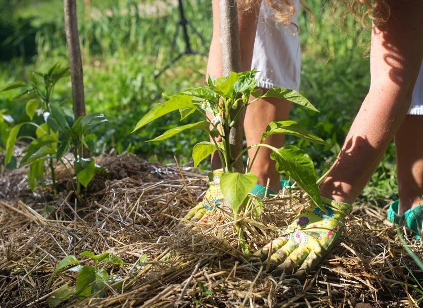 8 ошибок, которые совершают садоводы при мульчировании почвы