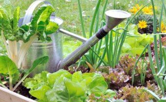 Как спасти посадки в огороде от жары: эффективные методы
