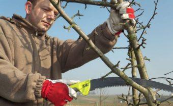 Как подготовить колоновидную яблоню 1 года к зиме