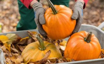 Тонкая наука: когда и как правильно собирать тыкву, кабачки и патиссоны