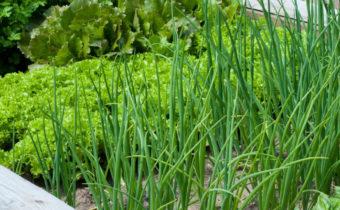 Шесть примеров зелени, которую можно сажать даже в сентябре