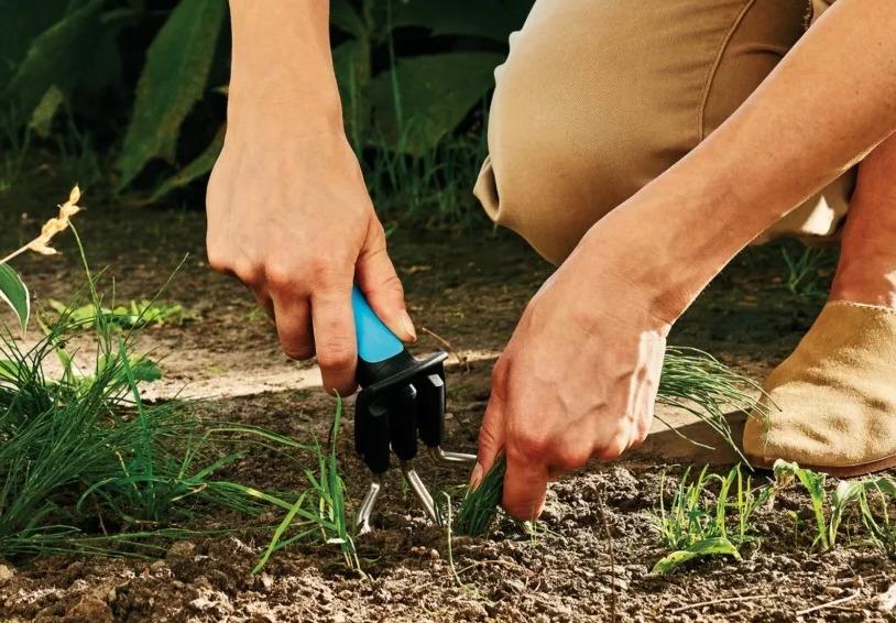 Знакомимся с сорняками: самые часто встречающиеся сорные травы на участке
