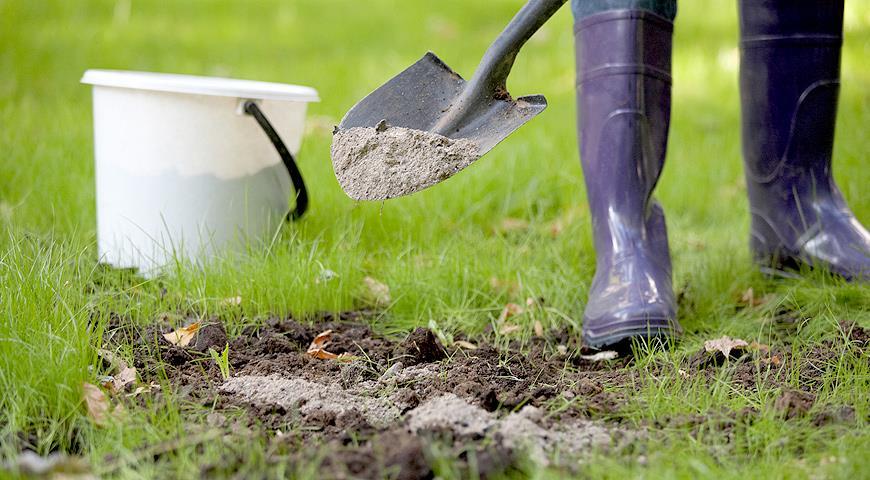 Можно ли использовать древесную золу в огороде в качестве удобрения и как правильно