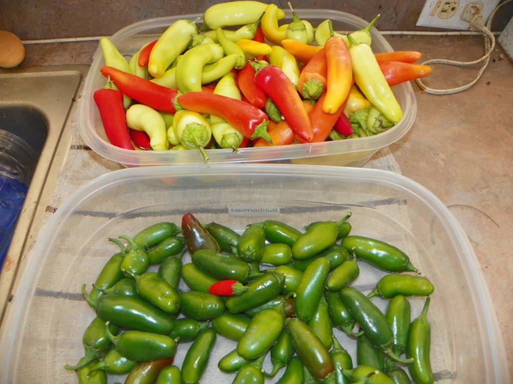 Способы хранения острого перца чили в домашних условиях и в погребе, в свежем виде и в заготовках