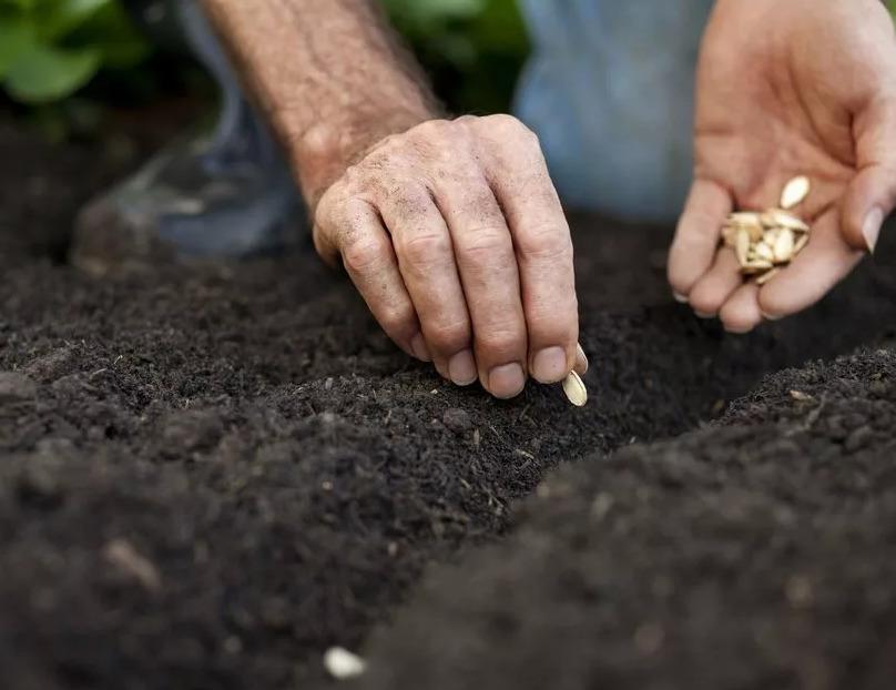Все за и против получения семян от овощей с грядки