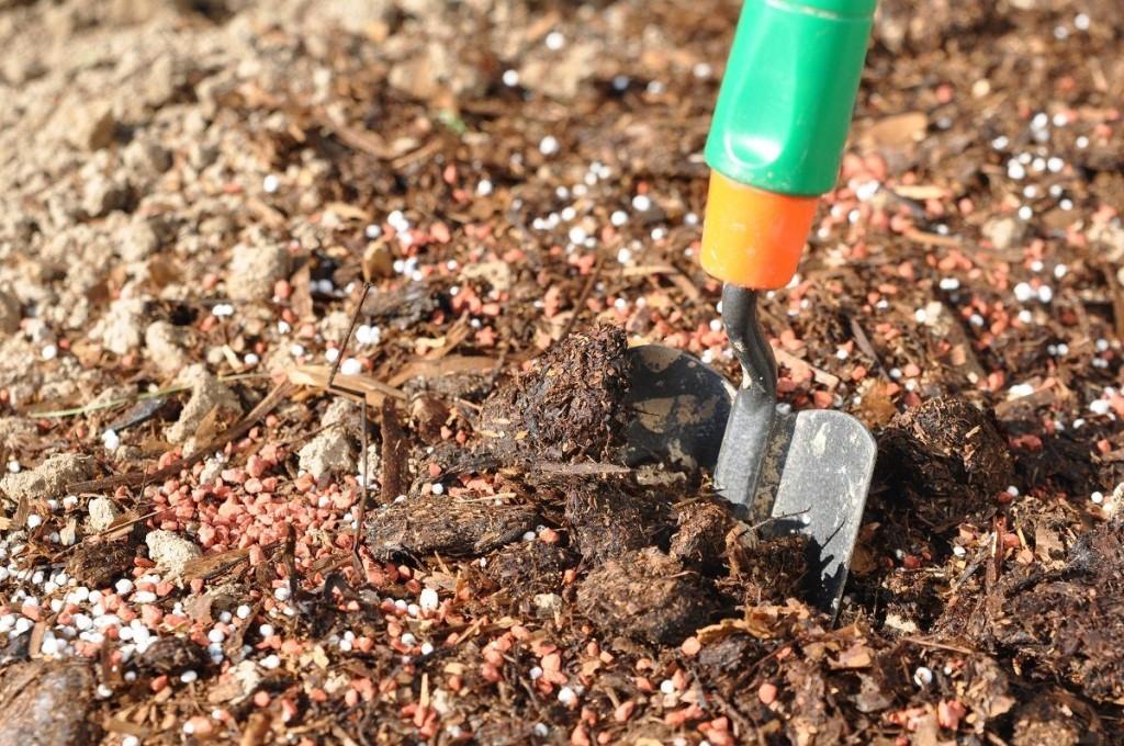 Какие удобрения вносят осенью после сбора урожая на дачном участке