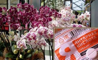 Как правильно использовать янтарную кислоту для орхидей в качестве удобрения