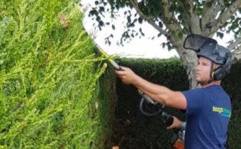 Что делать с живой изгородью осенью