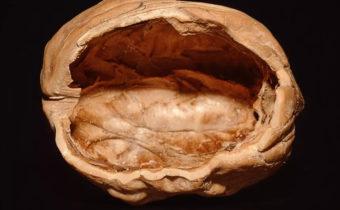 Почему орехи пустые и чем обработать лещину