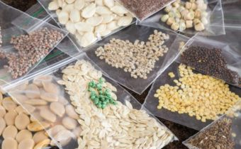 способов хранения семян до посадки
