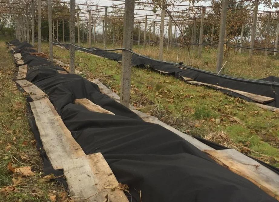 Лучшие материалы для укрытия винограда на зиму